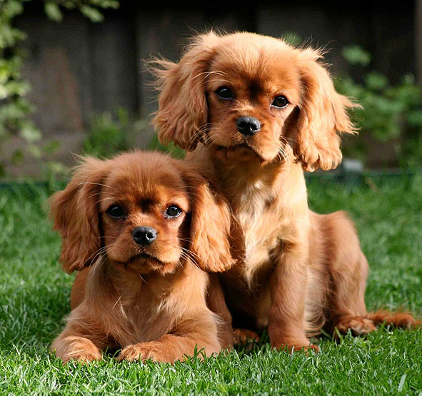 Image of: Pupper Breeding Dogs Nationwide Pet Insurance Dogs Nsw Promoting Responsible Dog Ownership