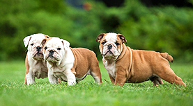 Become a breeder