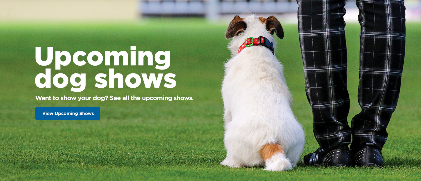 DOGS NSW – Promoting Responsible Dog Ownership